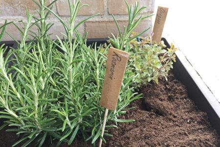 DIY plantepinde