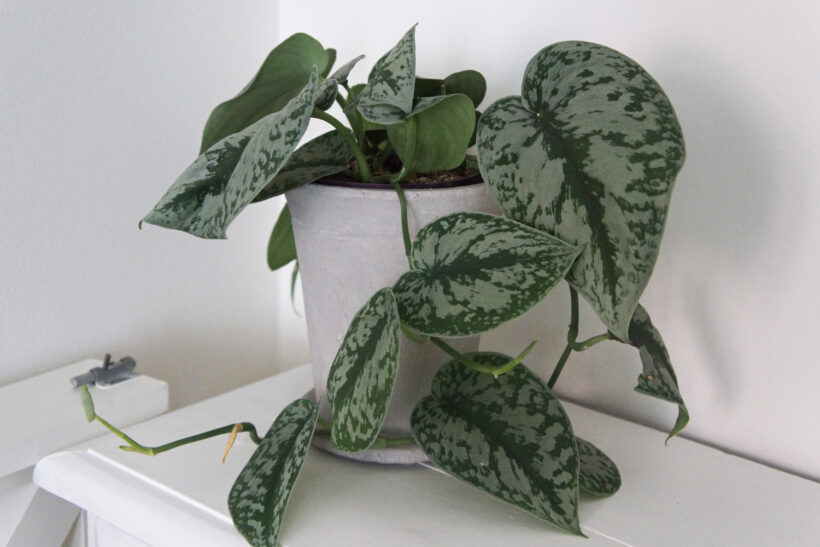 Planter i boligen