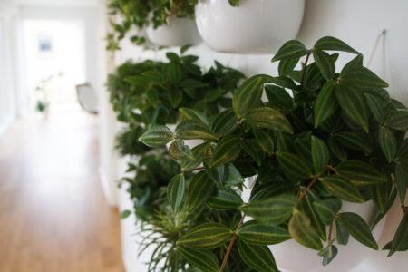 DIY plantevæg