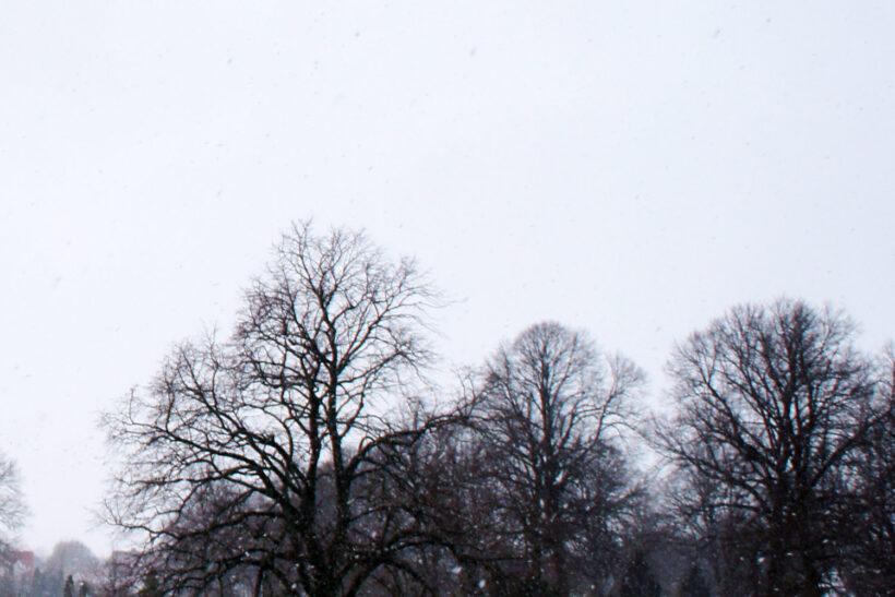StyleDesignCreate: sne